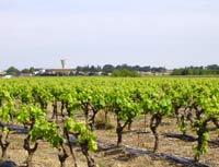 vigne-plantiers1